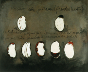 Planas Mochica - Charcoal and acryl on canvas, 123 x 150 cm, Monica Luza 1999